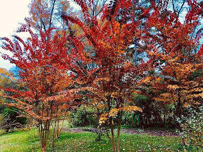 Crepe Myrtles in their Fall splendor.