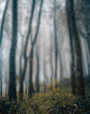 Fogy Tree Blur Background Stock Photo