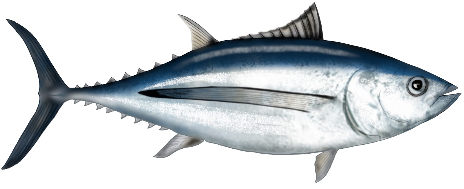 Canned Tuna Manufacturer Indonesia Canned Tuna Manufacturer Canned