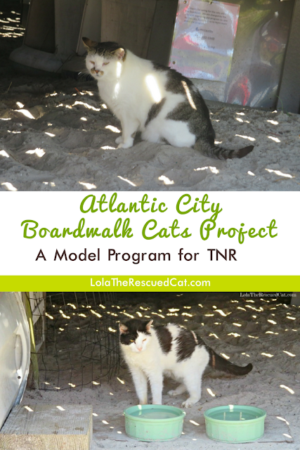 Alley Cat Allies|Atlantic City Boardwalk Cat Project