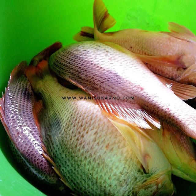 Petua Masak Asam Pedas Ikan Jenahak Yang Tersedap Dan Mudah, Kuah Pun Tak Pekat Dan Tak Cair Sangat