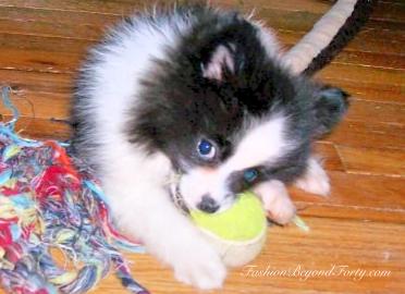 Pet Profile: Lyla - A Ruff Life But Very Loved