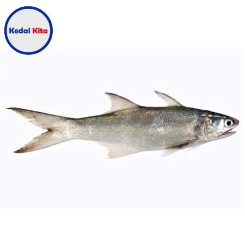 Ikan Senangin 500 Gram