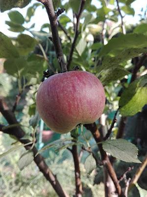 Ottobre nell'orto di Elle e Alli: le mele.
