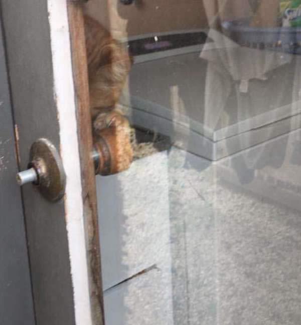 Gato logra abrir con sus patitas la manija de la puerta