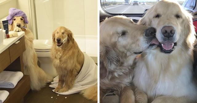 Τυφλός Σκύλος Έχει Για Οδηγό Μια Σκυλίτσα