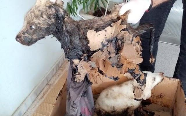 Θεσσαλονίκη: Ασυνείδητος πέταξε κουτάβια δίπλα σε δεξαμενή με πίσσα (ΦΩΤΟ)