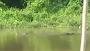 Cari Warga Pompengan yang Diterkam Buaya, Tim Sar Lihat Buaya Sedang Berenang