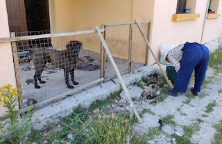 Securing Bekci's enclosure