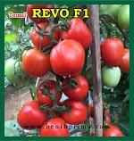 Benih Tomat REVO F1