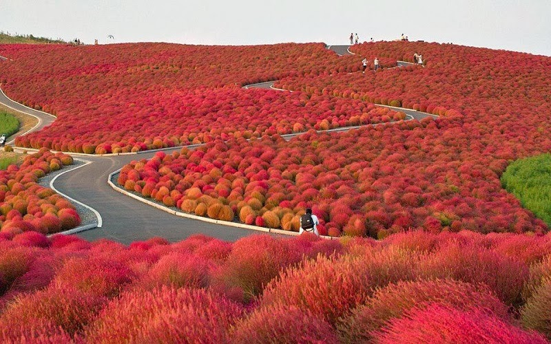 Hitachi Seaside Park, Hitachinaka, Japan - Too Beautiful To Be Real? 16 Surreal Landscapes Found On Earth