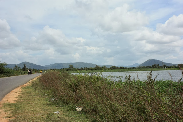 A wetlands fed by streams from BRT tiger reserve, outside Kollegal town.