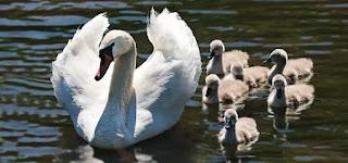 aile ve çocuklar