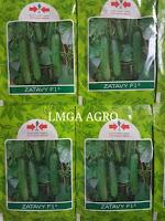 timun zatavy, bibit timun tahan virus, benih panah merah, budidaya mentimun, jual benih timun, toko pertanian, toko online, lmga agro