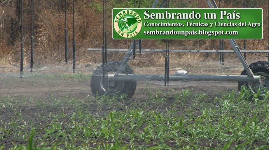 regando cultivo de maíz con pivote