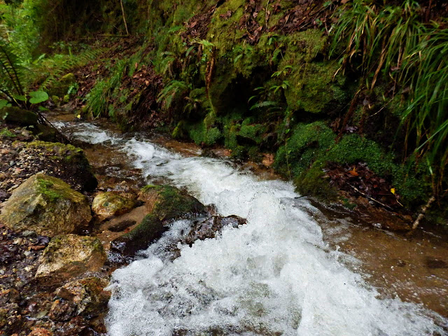 Stream in Gover Valley, St.Austell Cornwall