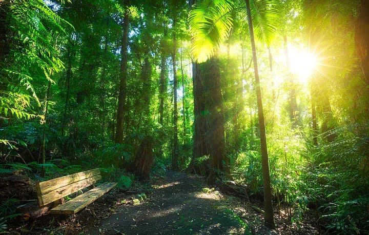 orman manzara resimleri
