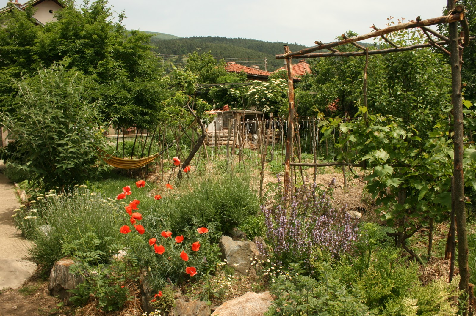 Everything You Need To Know About Growing Grapes Permaculture Magazine