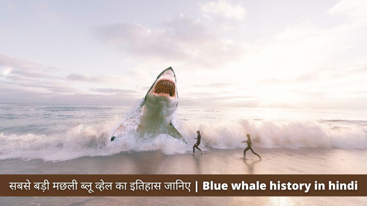सबसे बड़ी मछली ब्लू व्हेल का इतिहास जानिए   Blue whale history in hindi