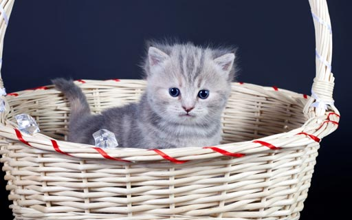 kitten pictures - kitten images - kitty pictures - cute kitten pictures - kitten cat pictures - funny kitten pictures