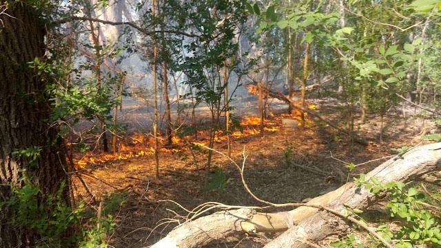 Incendio Forestal en Monte Maíz