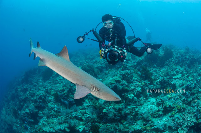 Dive Sipadan, Scuba diving, Underwater Photography, How to get to Sipadan, PADI Courses, Learn Scuba, Underwater Photography  Manila, Travel Sipadan, Martine Park Fee, Sipadan Dive Permit, Diving Asia, Dive the World, PaparazSea
