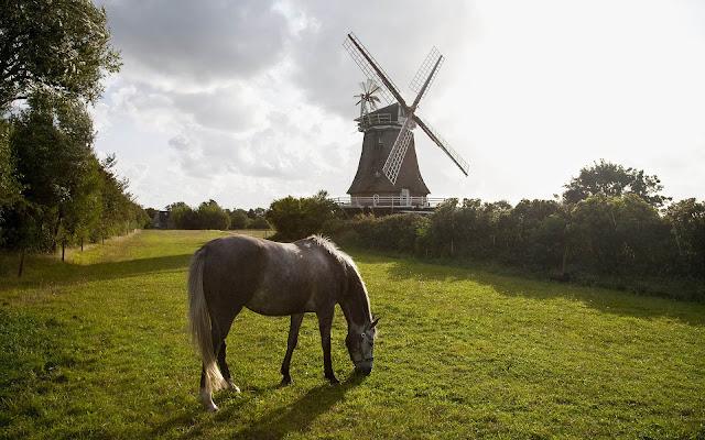 Paard in het weiland met een molen op de achtergrond