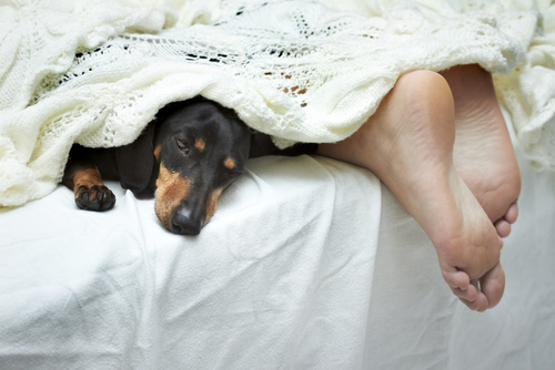 Science Confirms It Your Dog Should Sleep in Your Bed