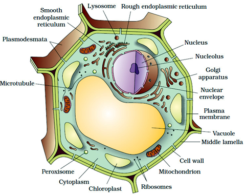 Welcome to the Living World: Cell The Unit of Life - Notes ...