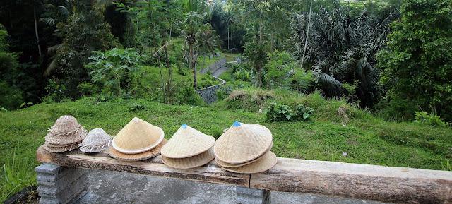 Culture de riz à Bali
