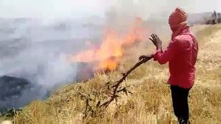 गेंहू के खेत में लगी आग।गेहूं के कटाई के बाद खेत में बचे डंठल में भी लगी आग।