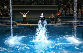 Dolphin performance