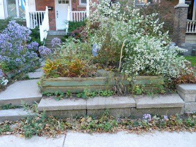 Roncesvalles Toronto Front Yard Fall Cleanup Before by Paul Jung Gardening Services--a Toronto Gardening Company