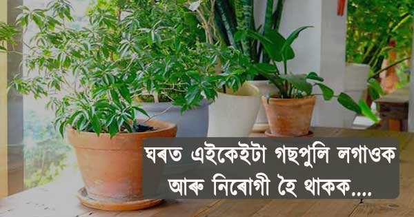 Must have Plants in Home for good health