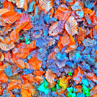 Autumn leaves in bright warm colours, shiny with rain