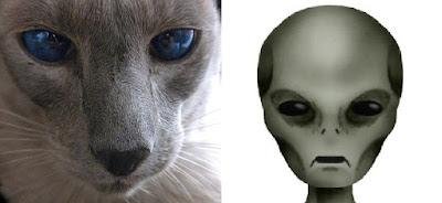 I gatti sono spie inviate dagli alieni?