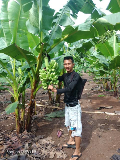 Pemuda asal lampung Ramadhan Fitra ( 27 th ) patut di jadikan isnpirasi bagi pemuda lain di Indonesia, dengan menekuni dunia pertanian dia mampu meraup keuntungan hingga 30 Juta dalam satu bulan. Tidak butuh berkantor seperti cita - cita pemuda lain seumuranya, berbekal tanah seluas 5 ha yang ia garap dan berbekal kesabaranya dalam merawat kebun pisang yang dimilikinya dalam waktu satu tahun fitra mulai merasakan manisnya pisang mas kirana yang di budidayakan di lahan miliknya.