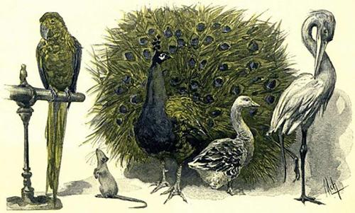 « La Famille Raton de Jules Verne » - Illustration de Félicien de Myrbach (1891)