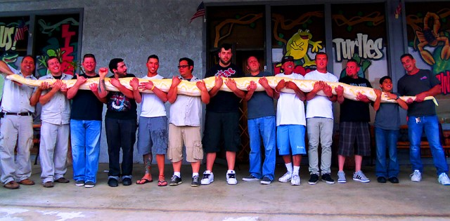Twinkie - The World's Largest Albino Reticulated Python