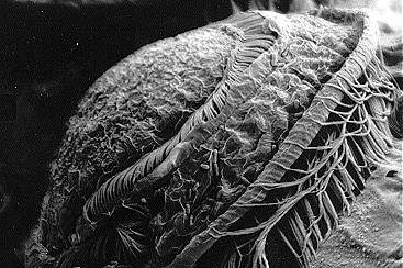 Penyakit Ikan Hias, Jenis, Penyebab dan Akibat