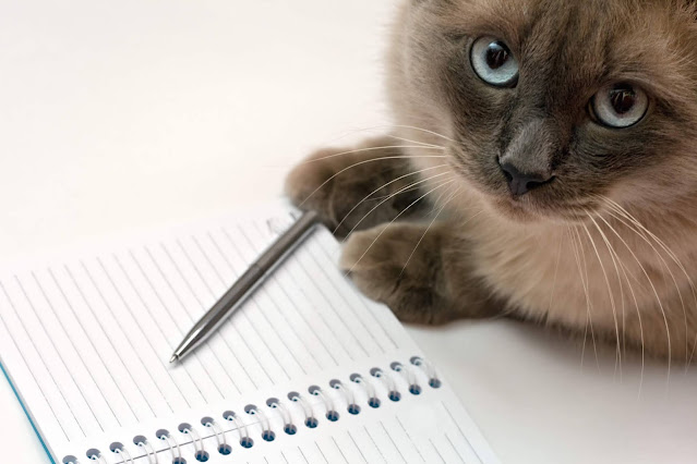 siamese cat with a notebook