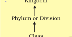Notes of Ch 1 The Living World| Class 11th Biology - Study