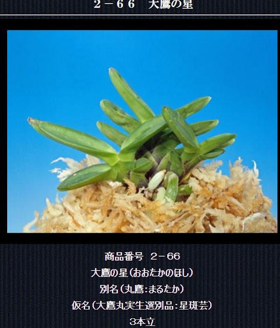 http://www.fuuran.jp/2-66html