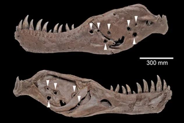 10 căn bệnh hiểm nghèo khiến khủng long cũng phải gánh chịu