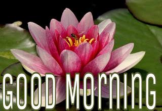 Good Morning lotus Flower Images