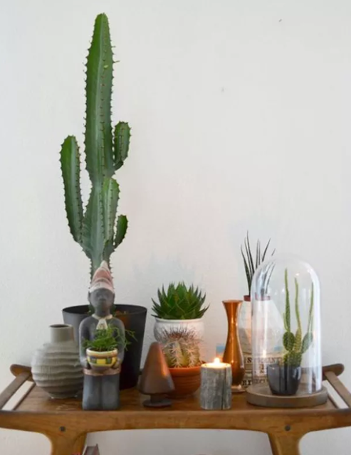 5 Ideas To Decorate With Plants