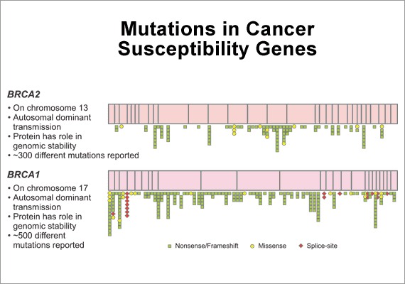 BRCA breast cancer genetic mutation. Mutations in Cancer Susceptibility Genes