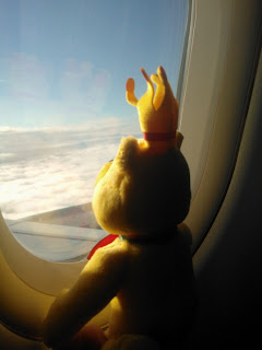 Pom Bear looking out a Plane Window