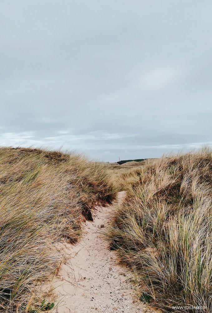 Dünen Landschaft in Nordholland, Natur