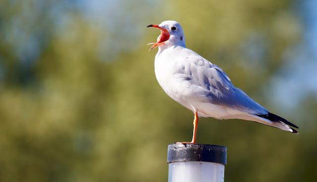 Bird Perching on Wood HD Wallpaper